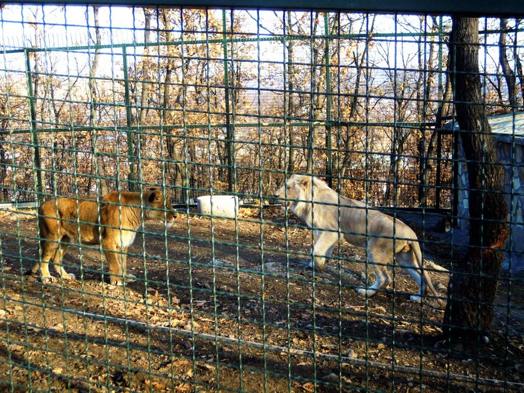 Zoološki vrt Bor