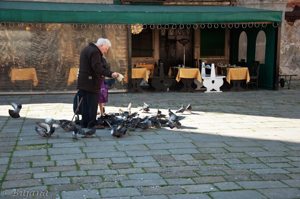 venecija golubovi