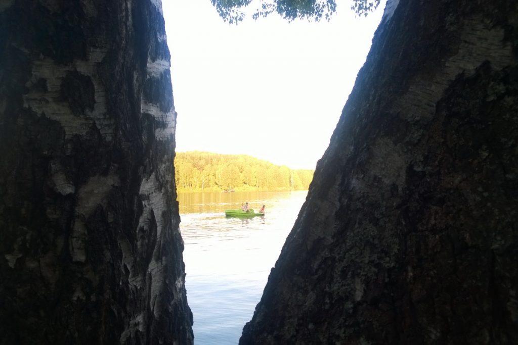 Vlasinsko jezero breze