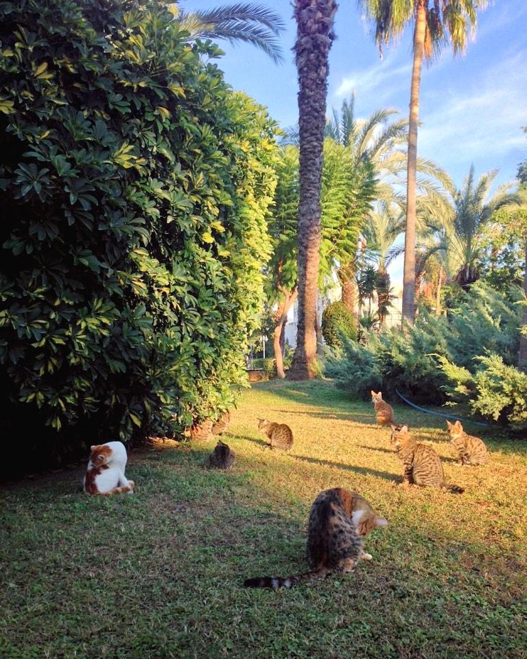 park sa mackama - kedi park u Alanji