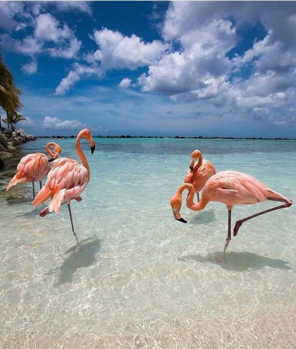 Bavaro plaza flamingosi