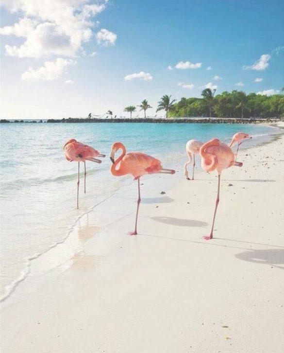 Flamingosi na plazi Bavaro