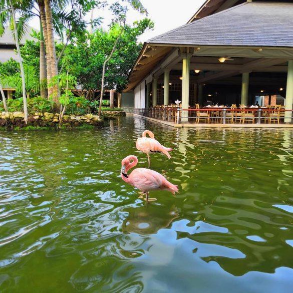 Hotel Punta Kana Dominikana
