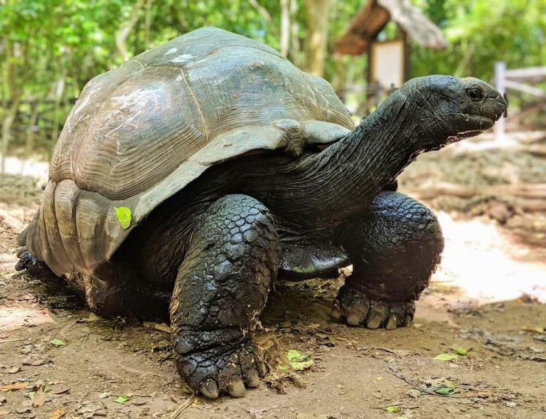 ostrvo kornjača zanzibar